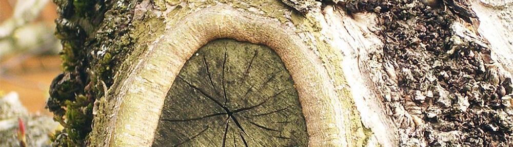 Mann der Bäume